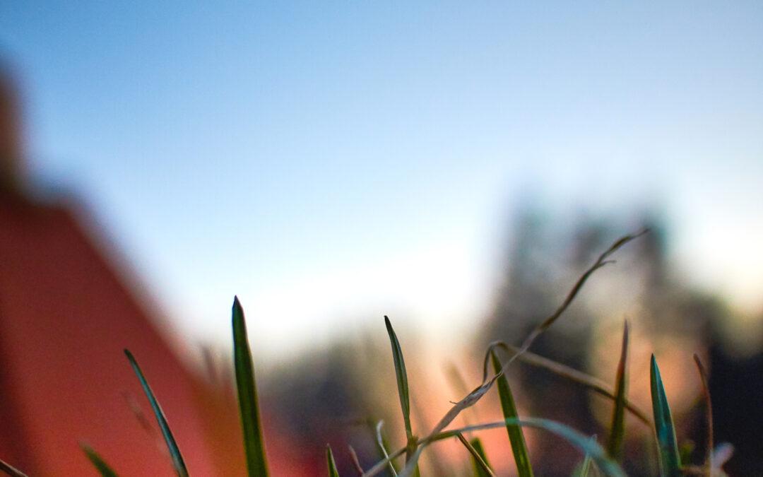 Græs og lejrplads, spejderlejr