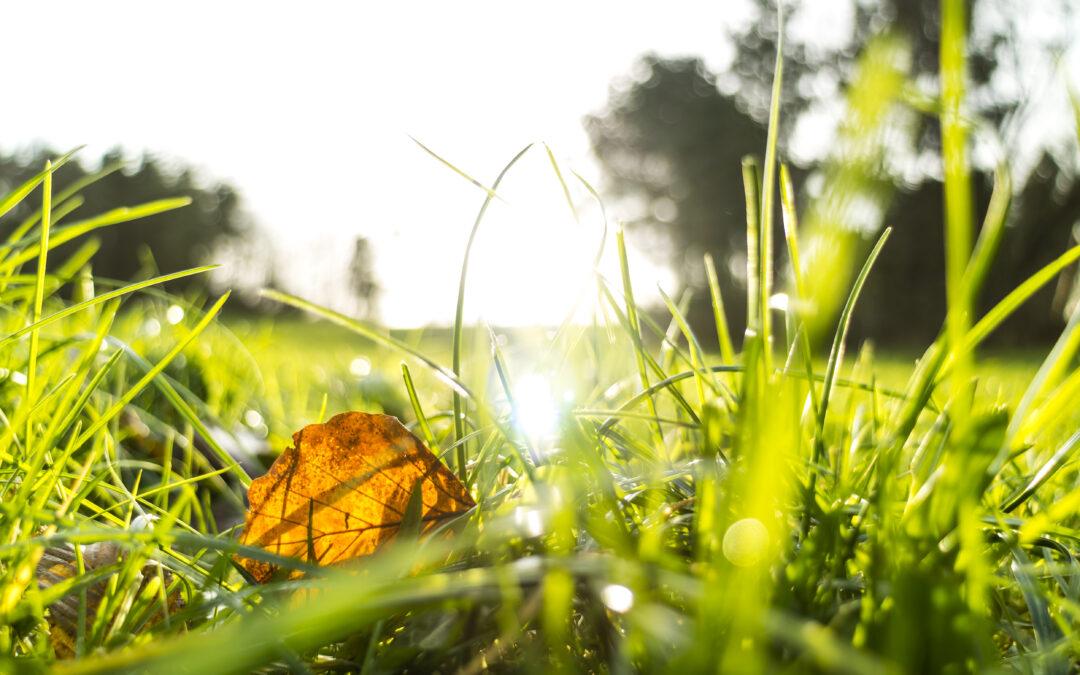 Solen, bladet og livet i græsset en efterårsdag